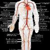 Varicose Veins and Circulation